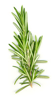 Rosemary_white_bg